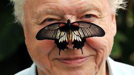 David Attenborough med en fjäril på näsan.
