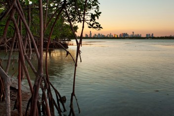 Miami-and-Mangroves